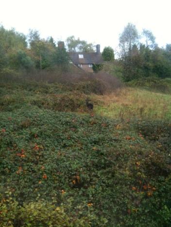 Our field (spot the deer!)